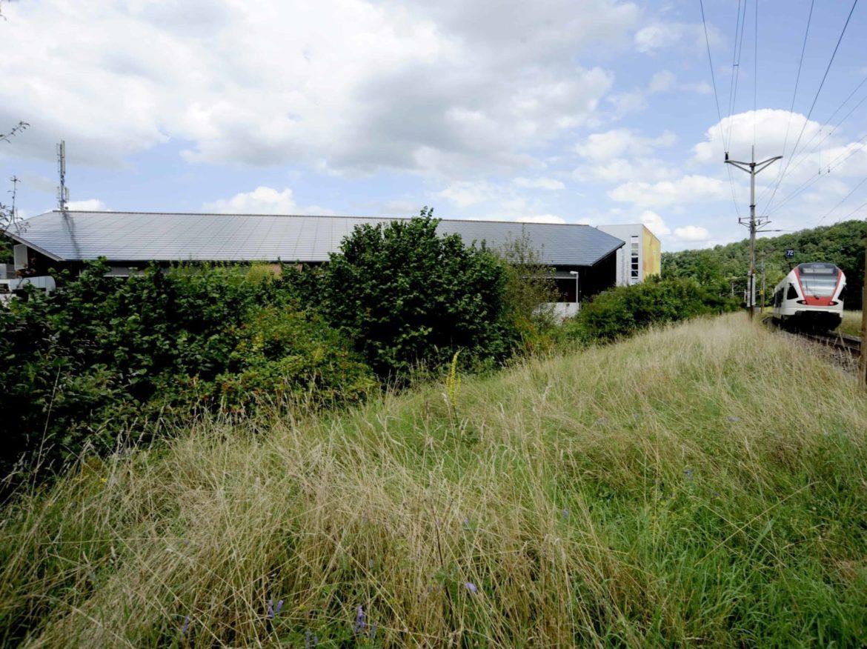 Eishalle Laufen 180 kWp